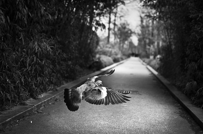 Фотограф Raphael Année