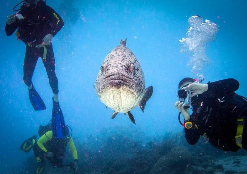 Австралийский Большой Барьерный риф