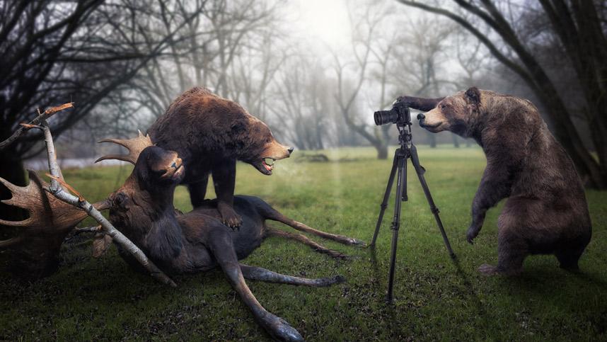 Художник Джон Вильгельм и его фотографии дикой природы