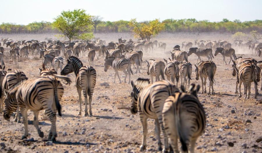 Путешествуя по Намибии (20 фото)