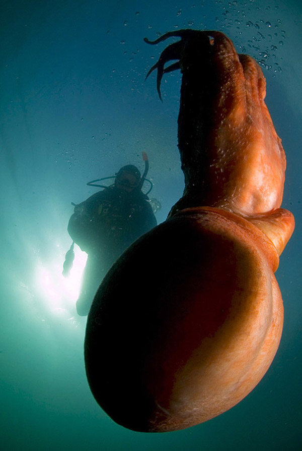 Подводные фотографии Вячеслава Плотникова