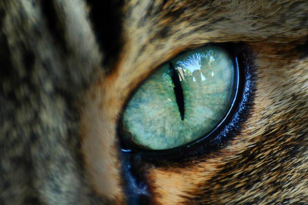 Художник показал, как выглядит мир глазами кошек