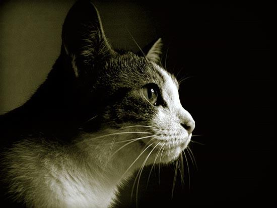 Кошки умеют манипулировать людьми