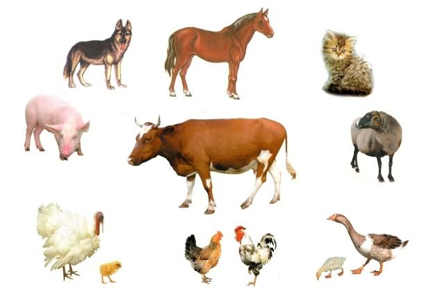 Общая масса людей и домашних животных на планете значительно превышает массу диких животных