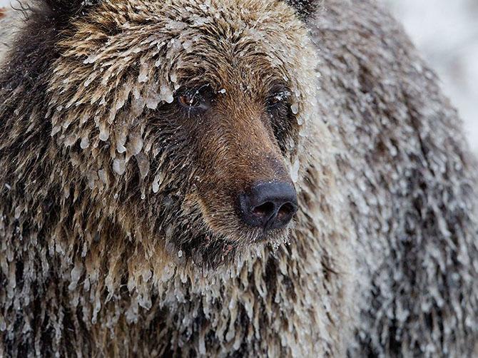 Лучшие фото National Geographic за февраль 2014