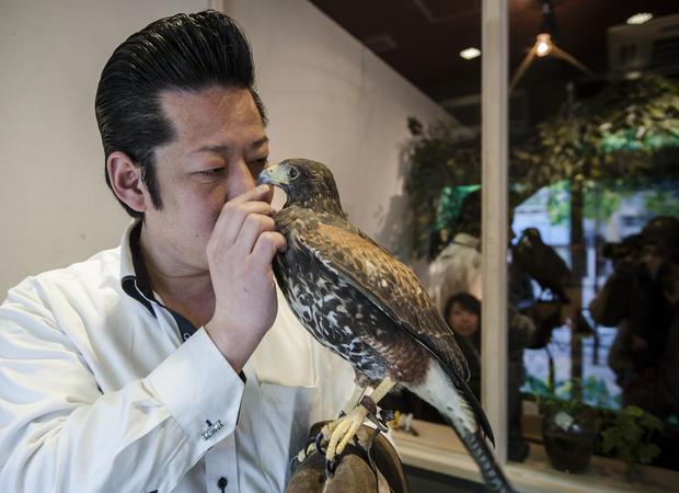 Кафе для птиц