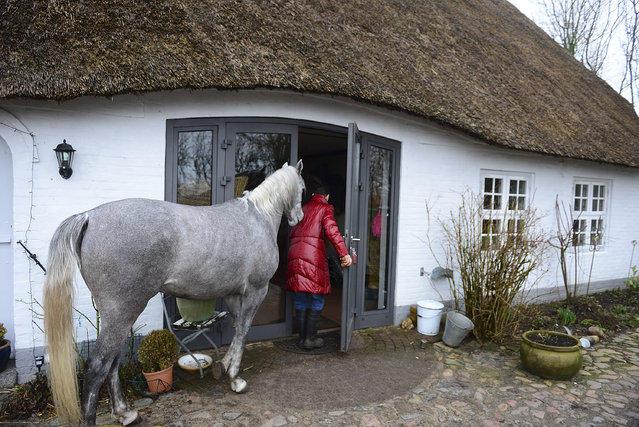 Доктор делит дом со своей лошадью
