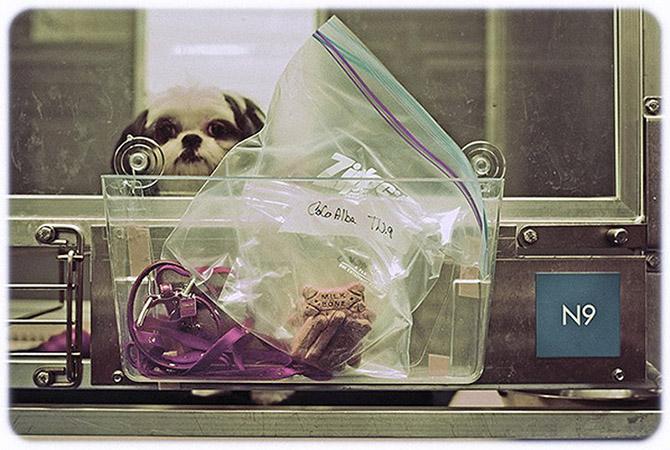 5-звездочный отель для собак