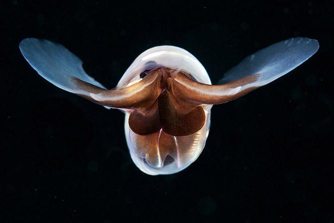 Монстр из глубин Мирового океана
