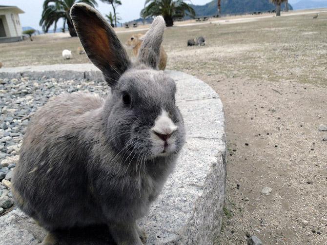 Путешествие на Острова кроликов в Японии
