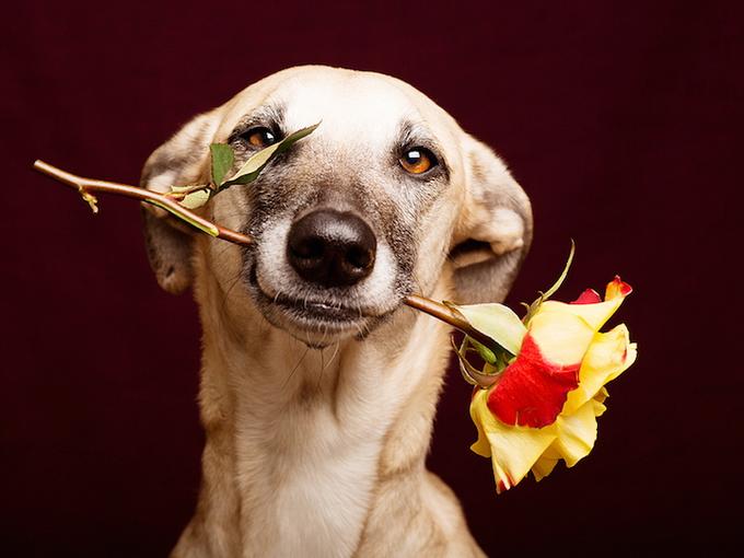 Портреты собак Elke Vogelsang