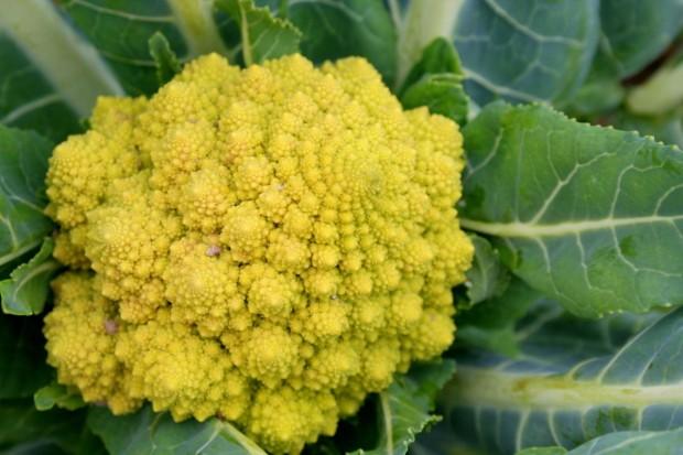 Капуста романеско — самый красивый овощ в мире