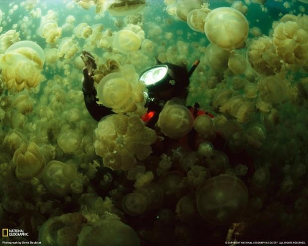 В этом озере можно безопасно плавать с миллионами медуз