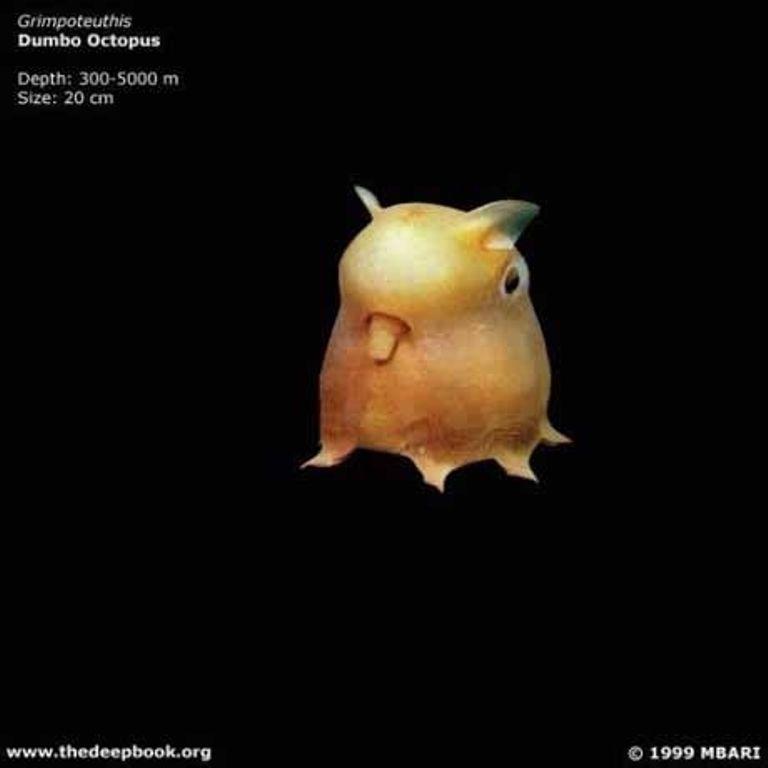 Марианская впадина - самое глубокое место на Земле (21 фото)