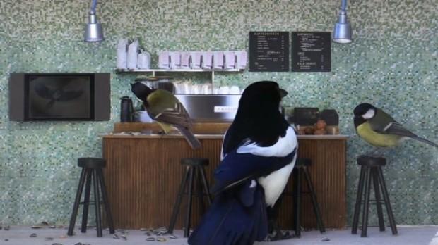 В Норвегии идёт телешоу, действие которого происходит в кафе для диких птиц