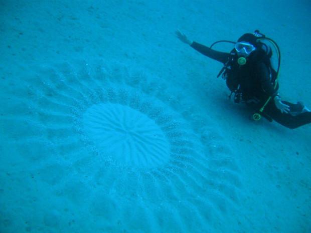 В Японии дайверы нашли загадочные круги на дне океана