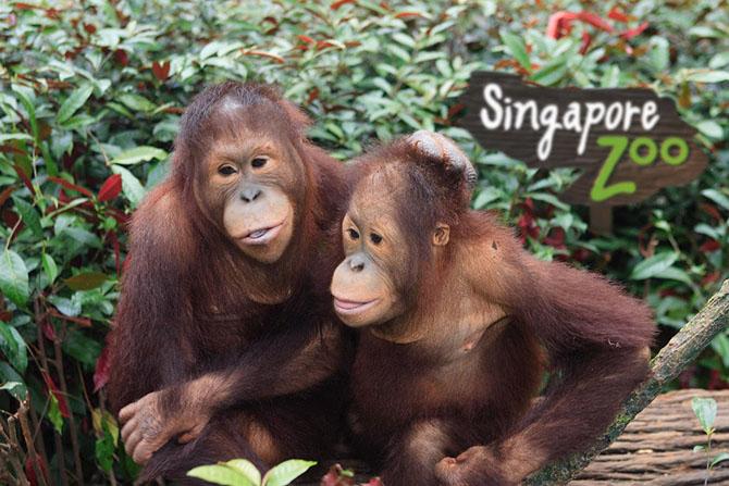 Самые необычные зоопарки