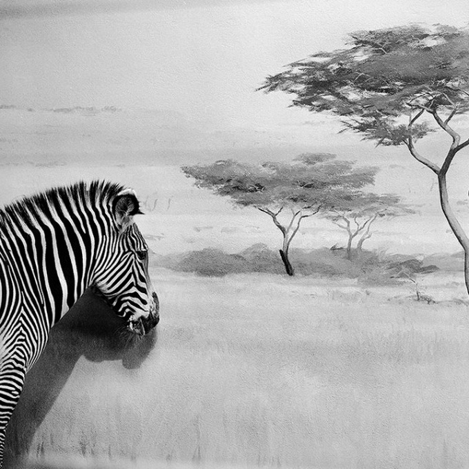 Животные Andrea Alessio