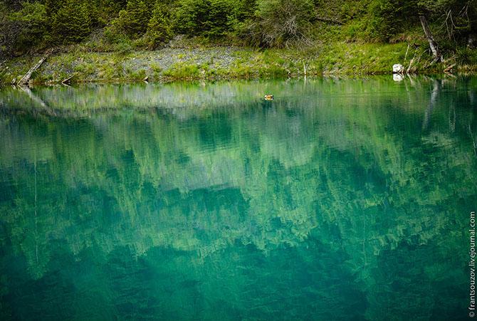 Утонувший в озере Каинды лес