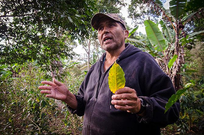 Истории рабочих, занимающихся кофе в Центральной Америке