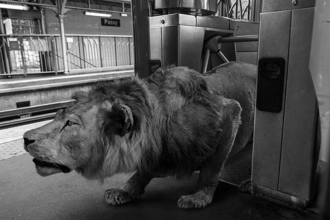 Животные в парижском метро