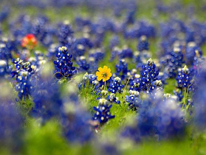 Красочные фотографии сезона полевых цветов в Техасе