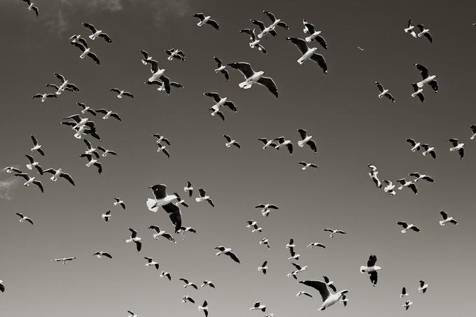 Фотограф Andreas Lind