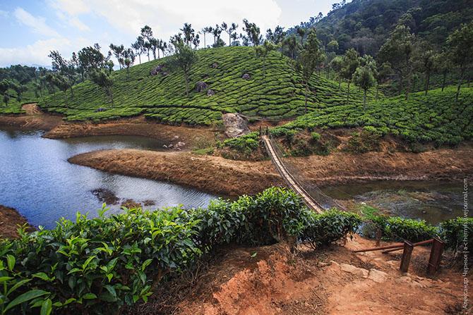 Чайные плантации Муннара