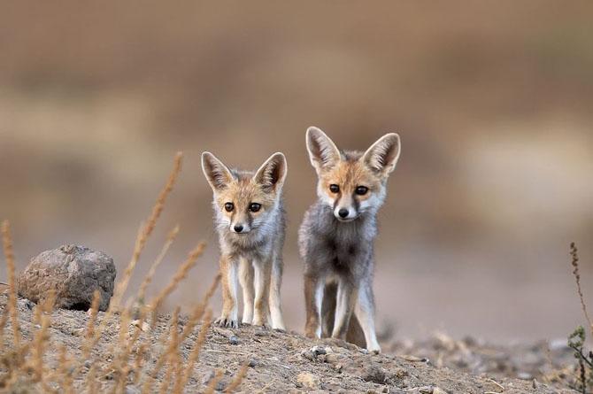 Лучшие фотографии National Geographic апреля 2014