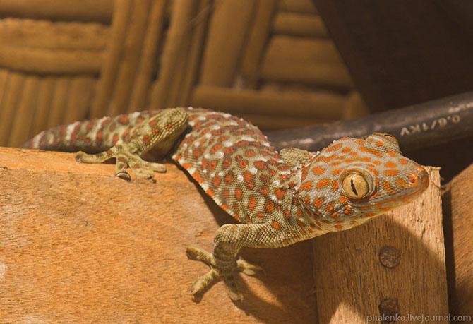Домашние животные на Бали