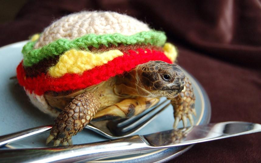 Шерстяные одежки для черепах