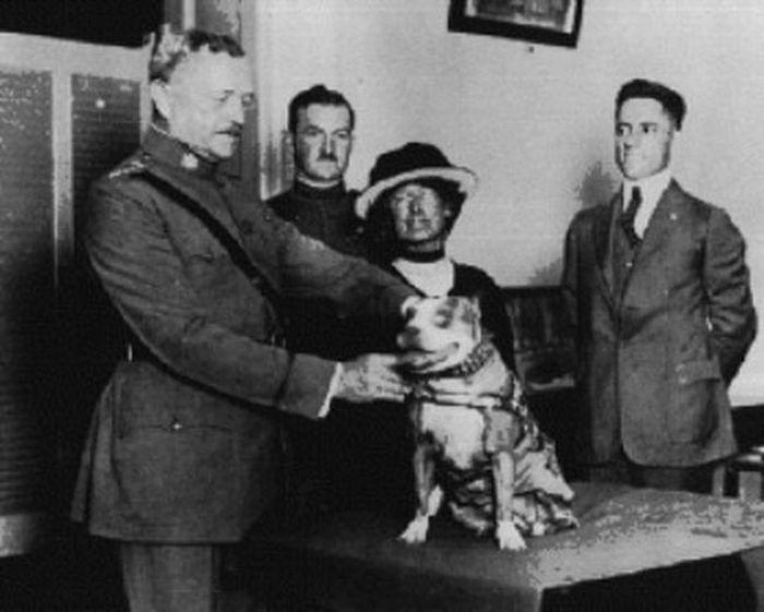 Уникальный боевой пес по кличке Стабби (12 фото)