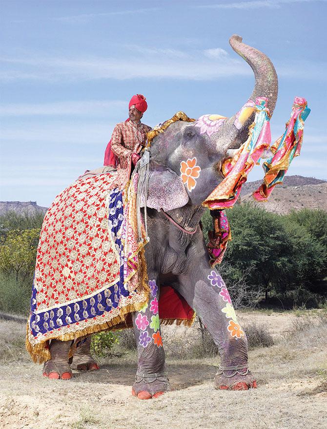 Как проходил фестиваль слонов в Джайпуре