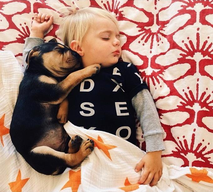 Ребенок и щенок спят вместе (14 фото)