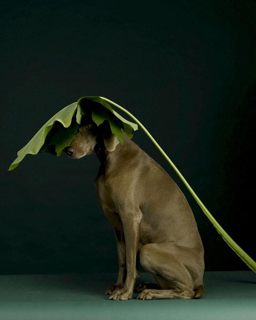 Забавные собаки (32 фото)