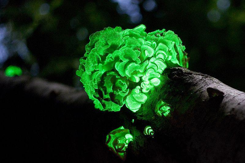 Самые красивые грибы в мире (15 фото)