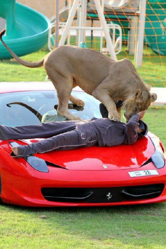 Хищники и шикарные машины — хобби миллионера из ОАЭ (41 фото)