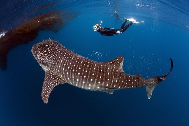 10 мест на планете, где можно встретить удивительных животных