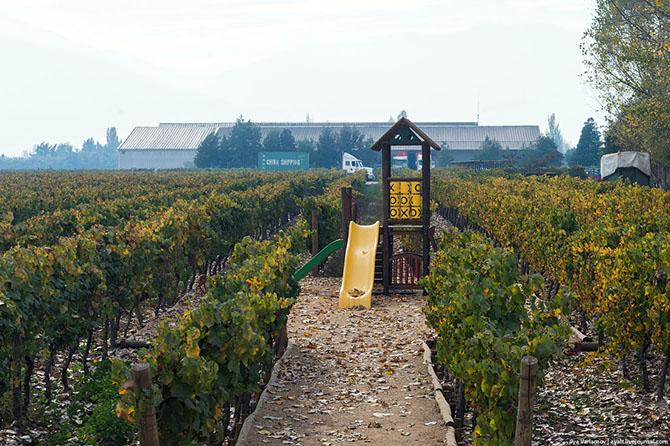 Прогулка по виноградникам Чили