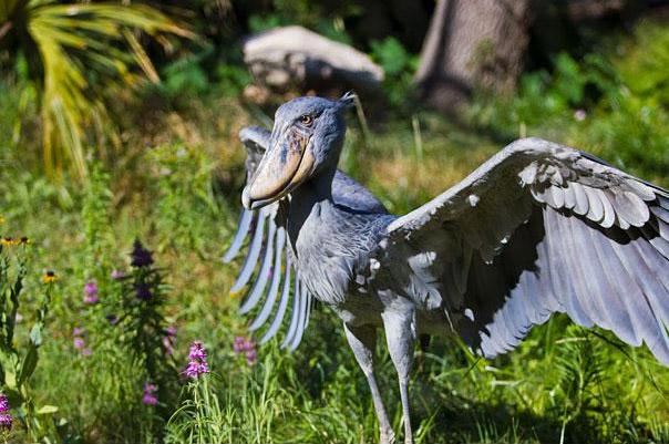 22 животных, о которых вы не знали