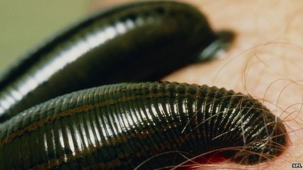 10 самых странных животных, которых выращивают на фермах