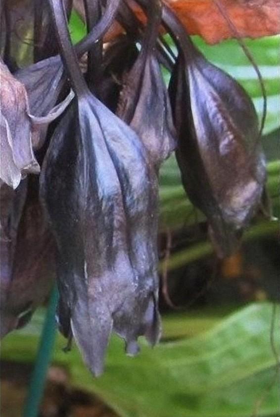 Самые жуткие растения