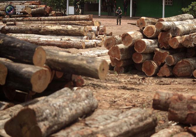 Уничтожение дождевых лесов Амазонии