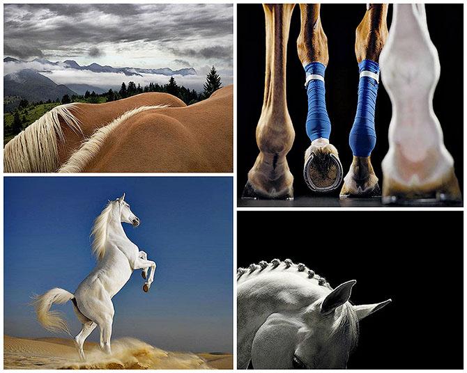 Грация прекрасных лошадей в фотографиях Тима Флака