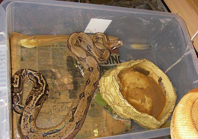 140 змей в одной квартире
