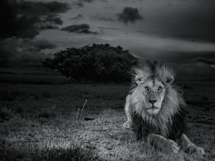 Жизнь, которую прожил Лев