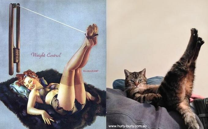 Котики и пин-ап