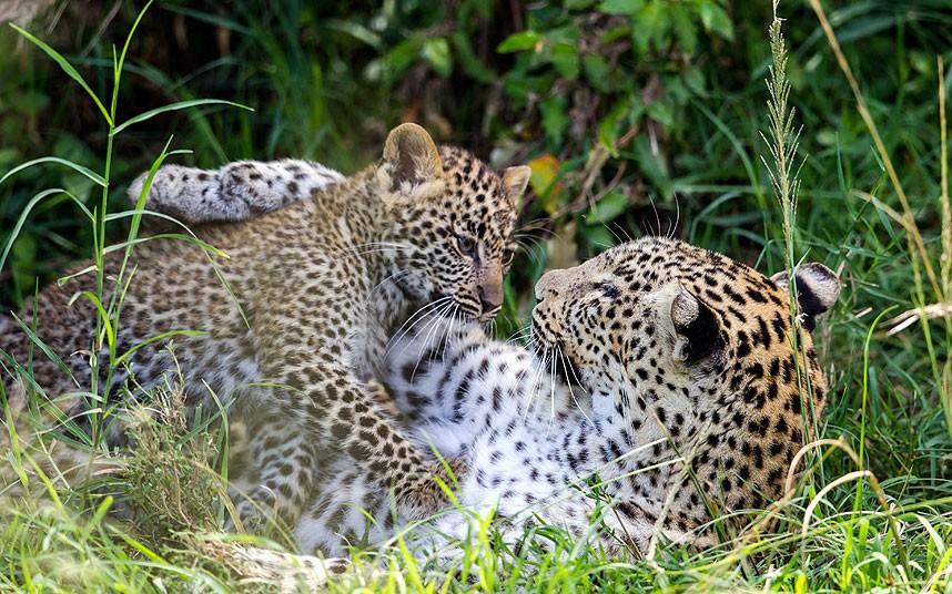 Дикая природа в Масаи Мара