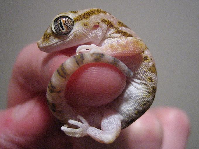 Крошечные животные на пальцах