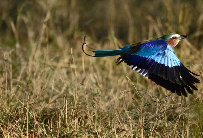 Сафари в Кении и Танзании